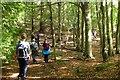 NT3936 : Woodland, Elibank by Jim Barton