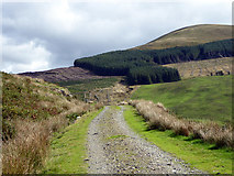 SH6906 : Climbing on the forestry road to Briddellarw by John Lucas