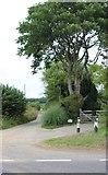 SU9421 : Track off the A272, Halfway Bridge by David Howard