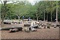 ST0972 : Wild play area, Dyffryn Gardens by M J Roscoe