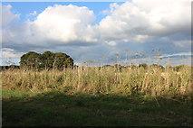 SU4355 : Field in Woodcot by David Howard