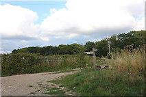 SU4355 : Path in Woodcot by David Howard