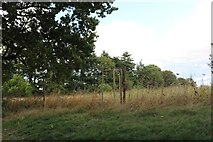 SU4356 : Meadow in Crux Easton by David Howard