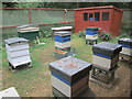 TL2171 : The apiary, Hinchingbrooke Country Park by Peter S