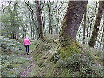 SN7277 : Path descending towards Rhiwfron halt by Rudi Winter