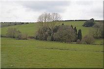 ST0104 : Woodland by River Culm by N Chadwick