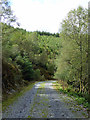 SH7908 : Forest road on Mynydd Pen-lan by John Lucas