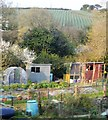 SW7736 : Allotments by the Maritime Line by N Chadwick
