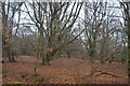 TQ4399 : Epping Forest by N Chadwick