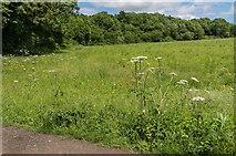 TQ2156 : Near Nohome Farm by Ian Capper