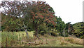 TA0097 : Old hedge line, Hayburn Wyke by Mick Garratt
