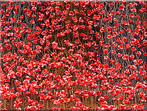 SJ8097 : A Sea of Ceramic Poppies by David Dixon