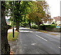 SO9419 : Tree-lined Leckhampton Road, Cheltenham by Jaggery