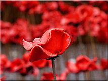 SJ8097 : A Ceramic Poppy by David Dixon