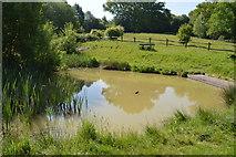 TQ5942 : Pond, Barnetts Wood by N Chadwick