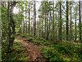 NH5051 : Clash Wood by valenta