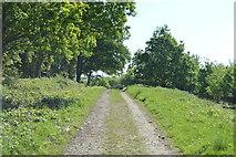 TQ5942 : Footpath up Castle Hill by N Chadwick