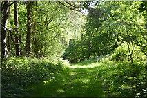 TQ6043 : Footpath, Devil's Wood by N Chadwick