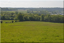 TQ6043 : Large grassy field by N Chadwick