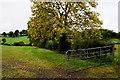 H4379 : Tattynagole Townland by Kenneth  Allen