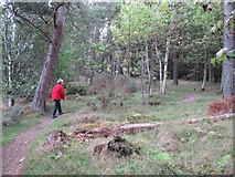NT2840 : Glentress Forest path towards Falla Brae by Les Hull