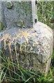 NZ2542 : Ordnance Survey Rivet by Adrian Dust