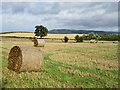 SO2396 : Post-harvest field : Week 38