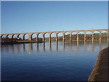 NT9953 : Royal Border Bridge by Ajay Tegala
