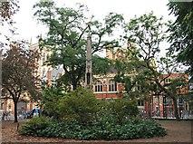 TL4458 : St John's Street Vicinity, Cambridge by David Hallam-Jones