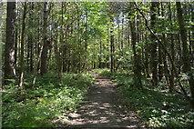 TQ6142 : Bridleway, Pembury Walks by N Chadwick
