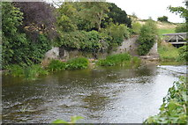 N8056 : River Boyne by N Chadwick