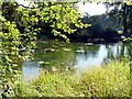 TQ0648 : Sherbourne Pond : Week 38