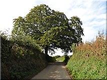 SS9027 : Lane to Hinam Cross by Roger Cornfoot