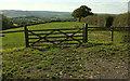 SX8588 : Field at Cotley Kiln by Derek Harper
