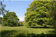 TQ6242 : Oak trees by Old Church Road by N Chadwick