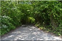 TQ6242 : Pembury Walks by N Chadwick