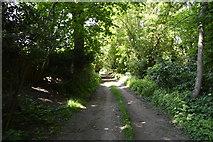 TQ6241 : Footpath, Marsheyharbour Wood by N Chadwick