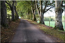 H5064 : Trees along Meenmore Road by Kenneth  Allen
