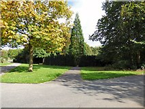 SJ9090 : Yew Tree Maze by Gerald England