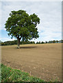 NY9170 : Lone tree in earthen field by Trevor Littlewood