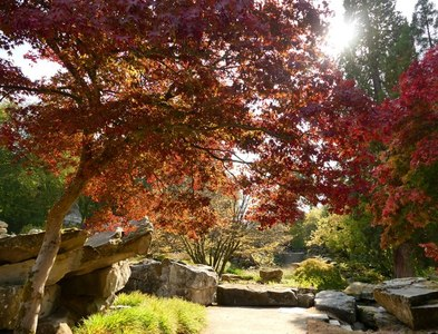 SK2669 : Autumn colour in Chatsworth Gardens by Graham Hogg