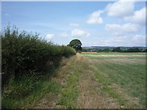 SD6074 : Farm track and hedgerow by JThomas