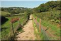 SX8457 : Footpath through tree nursery, Stoke Gabriel by Derek Harper