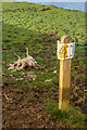 SD4240 : Dead sheep by Ian Capper