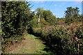 TL4701 : On Steward's Green Lane by Chris Heaton