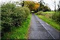 H4169 : Blackthorn hedge along Laurel Road by Kenneth  Allen