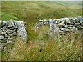 NY4314 : South entrance / exit, complex restored sheepfold, Ramps Gill by Christine Johnstone