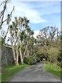 NX0942 : Palm trees at Logan Botanic Gardens by Oliver Dixon
