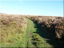 SX6781 : Bridleway joined by Michael Dibb