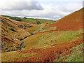 SN7453 : Autumn colours in upper Cwm Doethie, Ceredigion : Week 41